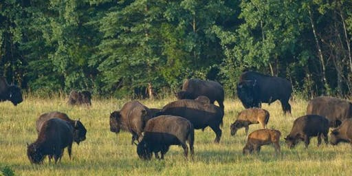 Bison Production Workshop  and Tour