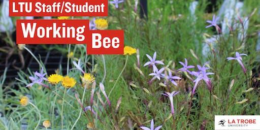 LTU Staff/Student Working Bee