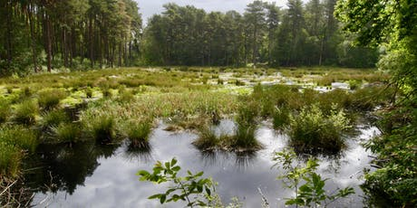 Lost mosses of Delamere Forest tickets