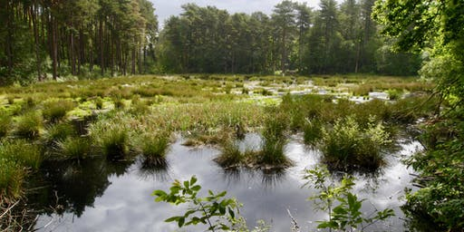 Lost mosses of Delamere Forest