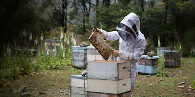 Beginner's Beekeeping Course 2020