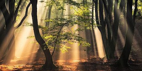 Foresta Terapia - Meditazione biglietti