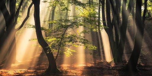 Foresta Terapia - Meditazione