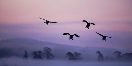 Mark Hamblin: Wild Scotland tickets