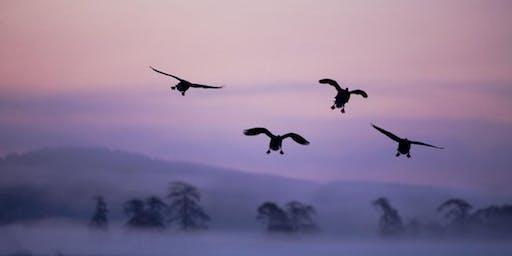 Mark Hamblin: Wild Scotland