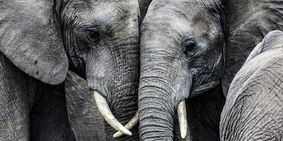 Wildlife Conservation in Africa: The New Way Forward