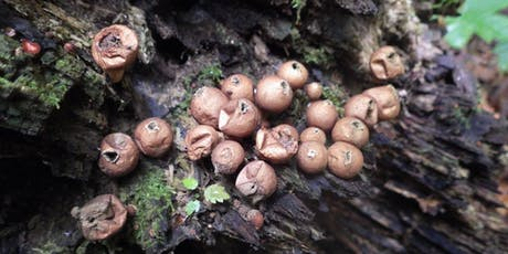 Intro to Mushroom Identification Hike tickets