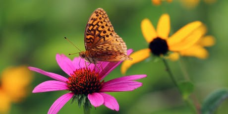 Making The Most Of Your Piece Of Nature: DIY Pollinator Workshop tickets