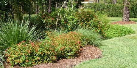 Native Plants 2.0 - FREE!  Tuesday, October 8th - 10:00 am  tickets