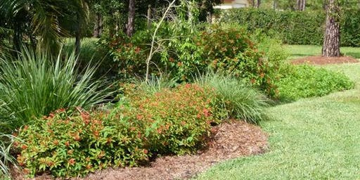 Native Plants 2.0 - FREE!  Tuesday, October 8th - 10:00 am