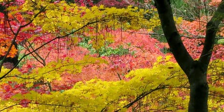 Trees and Shrubs for Fall Color tickets