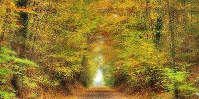 Reiki Retreat: Autumn Equinox - Level 1