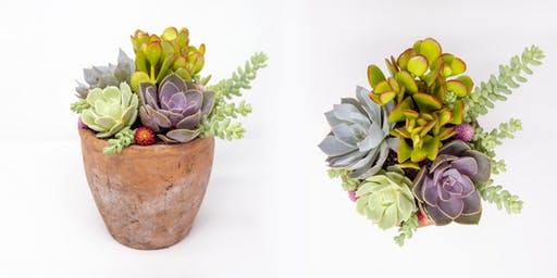 Stayin' Alive Succulents x Sugarboo & Co Southlake Workshop
