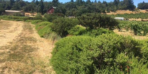 North Coast Vineyard Hedgerow Tour