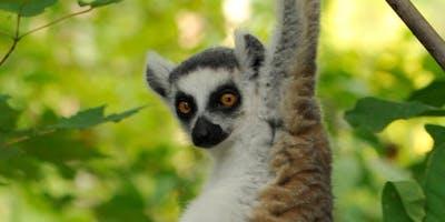Dartmouth Club of the Piedmont - Lemur Center Tour