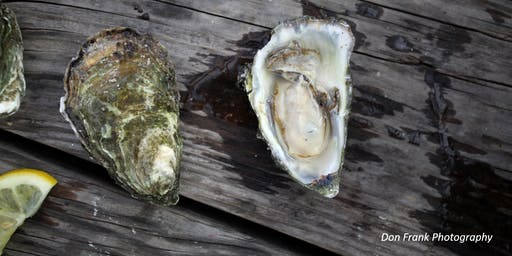 Art of Growing Oysters - Garibaldi Dock Walk with Pacific Seafood