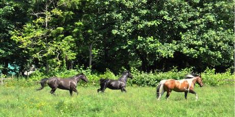 Healing Horses, Healing Breath, Healing Sound & Energy w/Matthew Kocel tickets