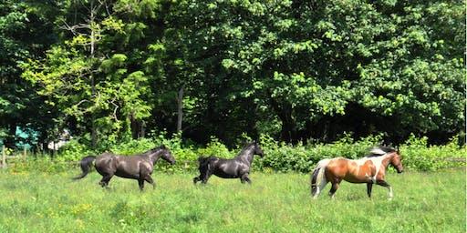 Healing Horses, Healing Breath, Healing Sound & Energy w/Matthew Kocel