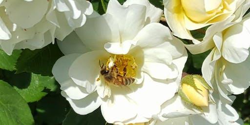 Passeggiata apiletteraria