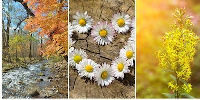 Spirit, Nature & You