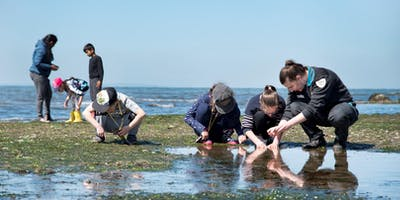 Junior Rangers Rockpool Ramble - Barwon Bluff Marine Sanctuary
