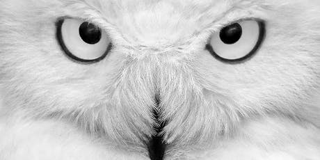 Les Yeux du Harfang – Snowy Owl tickets