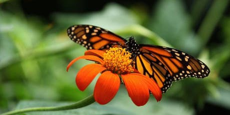 How to Create a Garden for Monarchs and Milkweed Plants Giveaway tickets