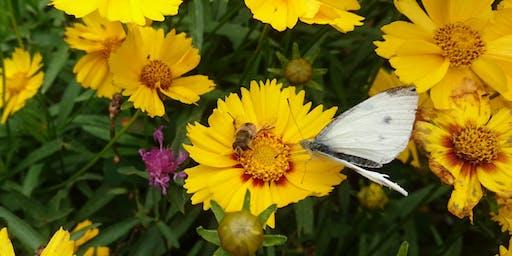 Pollinators Picnic: Craft and Bug Hunt