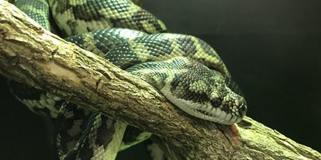 Hands on reptile experience tickets