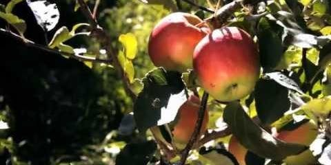 Autumn Equinox Gathering ; Forage, Fire Cider & Permaculture Walk Open Day