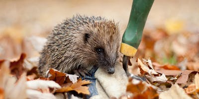 Hospitable Horticulture for Hedgehogs