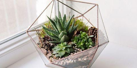 Starting Succulents: No Green Thumb Needed