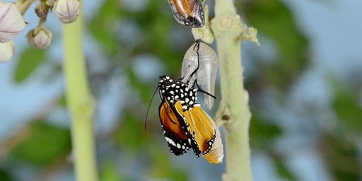 Milkweed, Monarchs, and More!