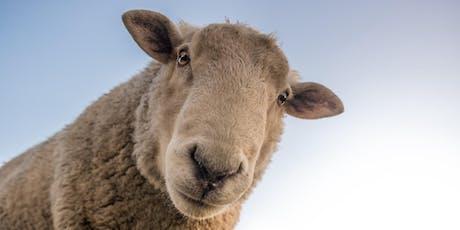 Sheep can help you sleep tickets