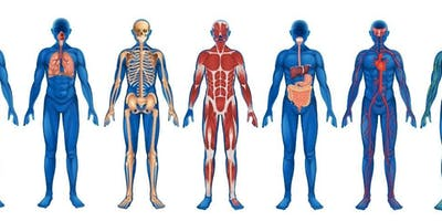 Anatomy and Physiology Level 3 Diploma