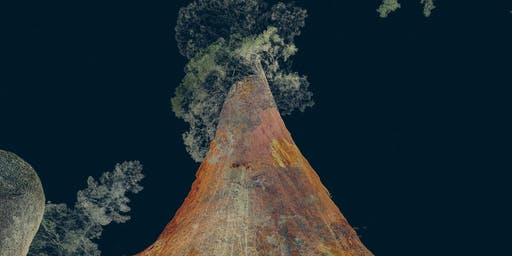 Digital Fossils and The Artistic Use of Laser Scanning for Virtual Reality