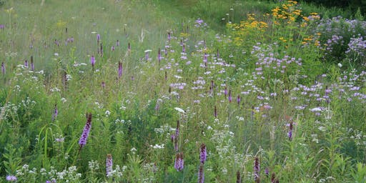 Breaking the Rules: Ecological Landscape Design & Traditional Methods