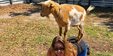 Goat Yoga Tampa plus free drink! 11/17 @ Cage Brewing; St. Pete tickets