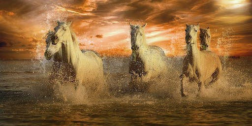 A Spiritual Journey with Horses