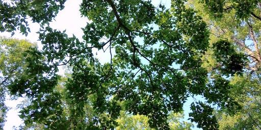 Native Tree Identification Walk 2019