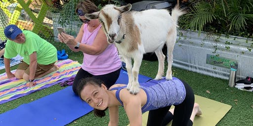 Goat Yoga Tampa plus free drink!  Bullfrog Creek Brewing 10/19/19; Valrico