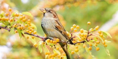 Bird Language tickets