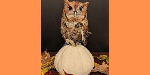 Happy Owl-ween