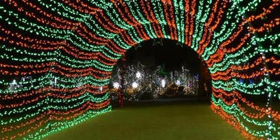 ***** Group Living Desert Wild Lights
