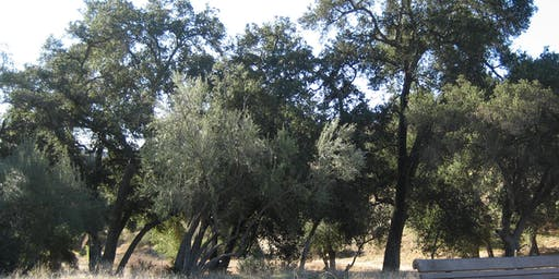 Redlands Conservancy - CEEP - Let's Get the Forest Growing