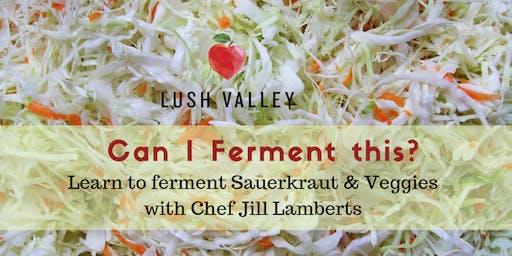 Can I Ferment This? Sauerkraut & Veggies
