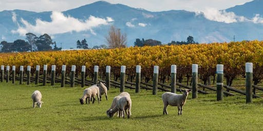 Wines of New Zealand