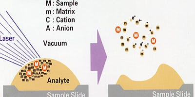 Matrix-assisted Laser Desorption/Ionization (MALDI) Principles and Applications