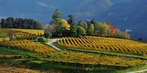 Northern Italy Wine Seminar