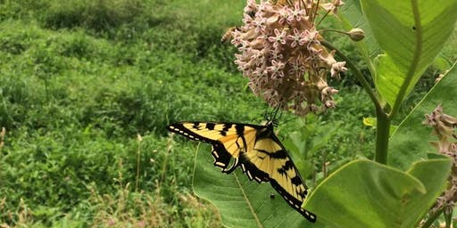 Beginning Milkweed: Cropping & Conservation